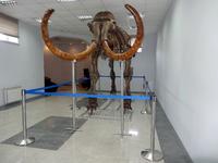 Скелет мамонта Arctic King