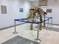 Скелет мамонта Arctic Queen